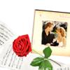 Belle & Aden - Rose