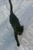 зимняя кошка
