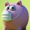 influenza pig