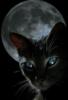 black_mooncat