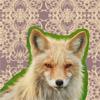 sly mister fox