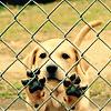 poodleparlour userpic