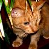 birches userpic