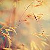 AutumnVerse: Landscape 1