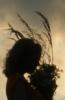 захід сонця, польові квіти
