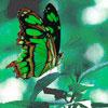 Nikki: Butterfly