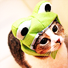 i has frog on hed