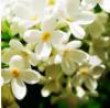 милыецветочки