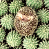 The Coalition For Disturbing Metaphors: Happy Hedgie