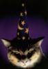 maison_du_chats userpic