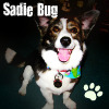 Late Night Drops of Random: Sadie Bug