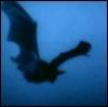 batticus