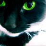 koshko_o userpic