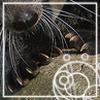 zoeology userpic