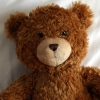 william_bear userpic