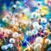 Jessica K Malfoy: nature: rainbow dandelions
