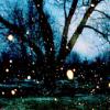 Jessica K Malfoy: nature: fireflies