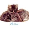 rabbit_cat_brown