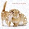 rabbit_cat_christmas