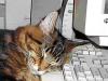 SleepCat