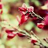 little_ozzo userpic