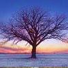 Default - Tree