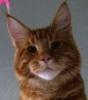Кошки из Суджук Кале: Artur