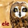 elebridith: Chris Pretty