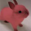 [Bunny]- *sniffsniff*