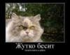 ktylx userpic