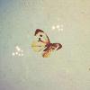 stock: butterfly