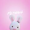 YB Pigrabbit