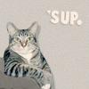 Animal-SupCat