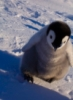 january_penguin userpic