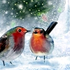 Stock - Winter - birds in snow
