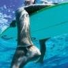surf_king