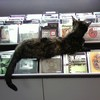 RJ: Record store kitty