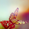Sabi: {Stock} Butterfly