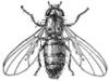 flymarket userpic