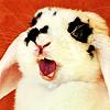 Animal: Appalled bunny