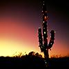 Mercy: [Stock] Desert Cactus