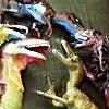 Raptor bros minus Shorty 1