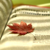 STOCK - leaf on book