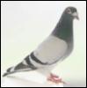 kasku userpic