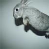 Rachel: rabbit
