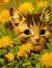 kot_w_palto userpic