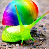 _r snail