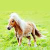Long live Buckbeak!: My Little the pony