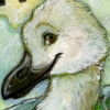 clifford_caw userpic