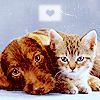 LikeCheapWine: ∞ cat + dog = ♥